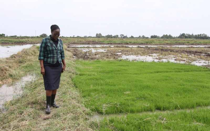 Sh5b irrigation project brings hope to once hardship hamlet