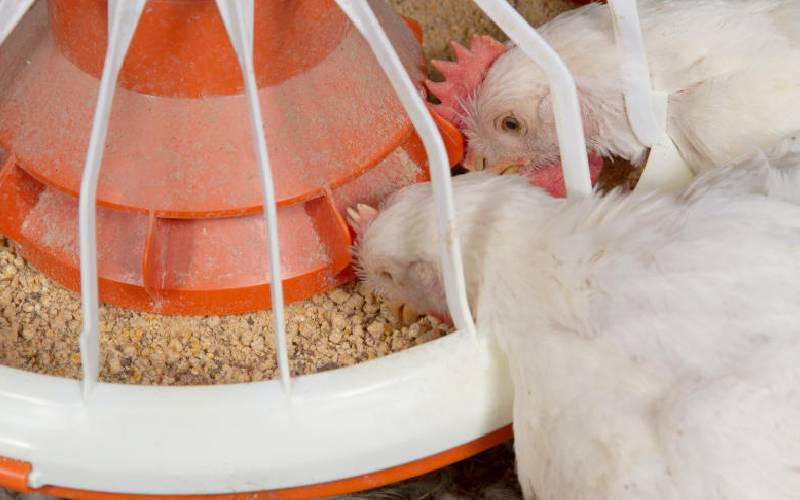 Some strategies to help you minimize expenditure on feeds