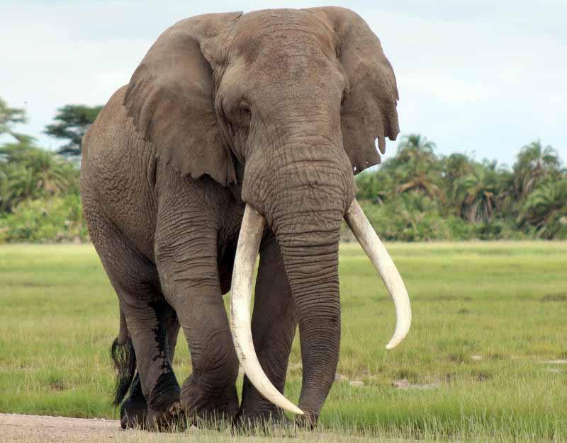 Spectacle of the wild as Elephants break into Taita Taveta homes to lick sugar