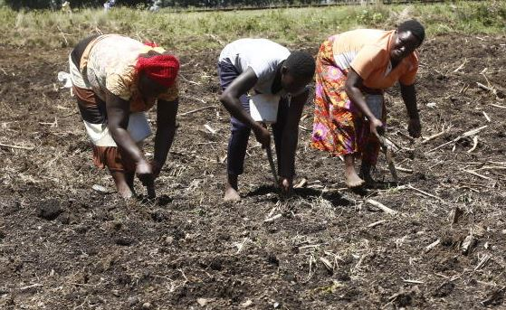 State clears way for affordable fertiliser