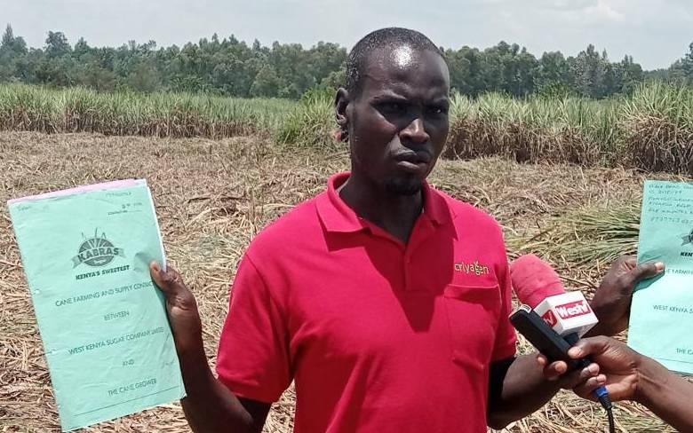 Sugar regulator, police urged to address cane poaching in Busia