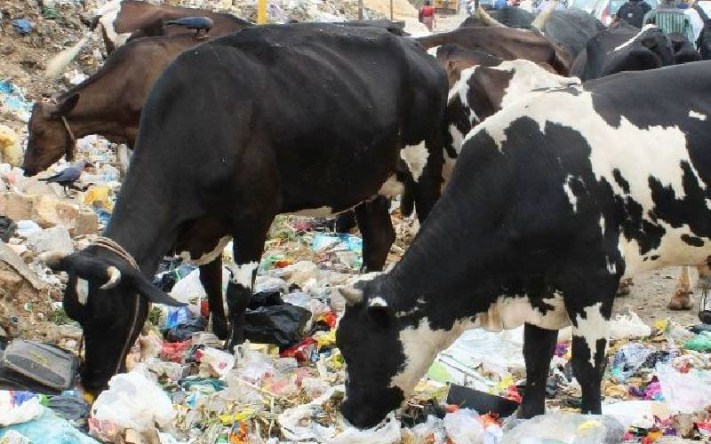 The beef with plastics on your dinner tables