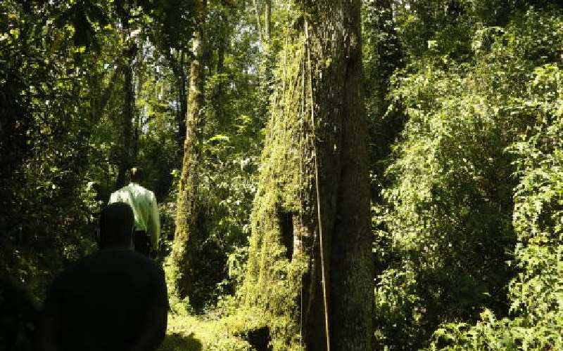 The serene forests where life thrives