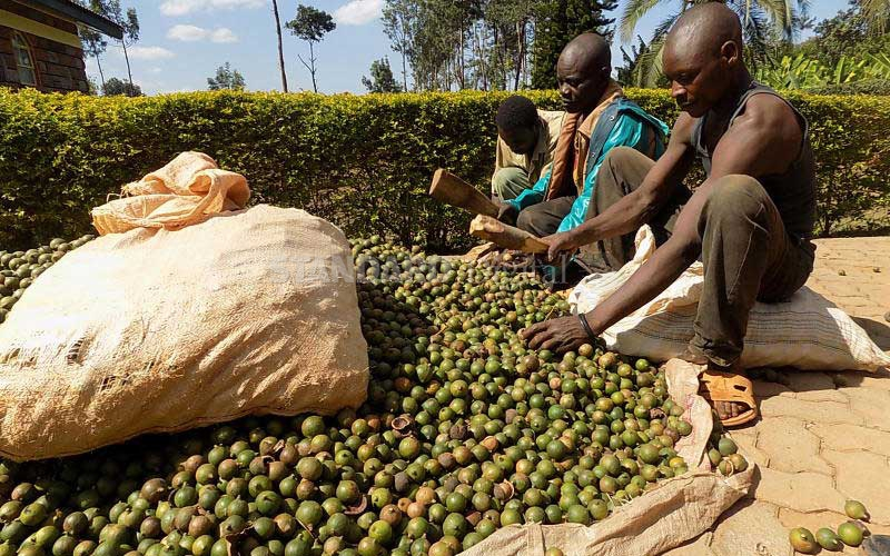 Firm listed for macadamia nuts export