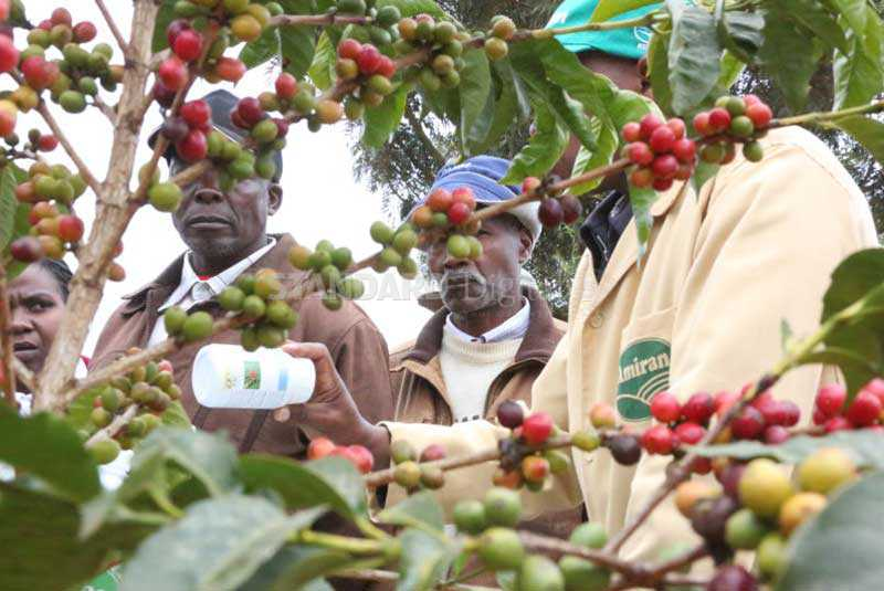How foreigners control coffee trade to farmers' disadvantage