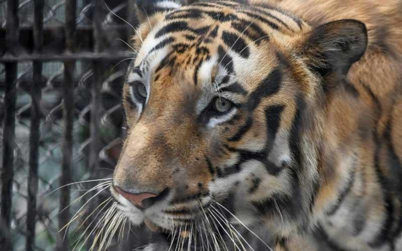 Tiger kills Zurich zookeeper