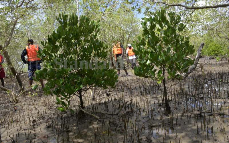 Traversing the Coastal mangrove forests to save endangered trees