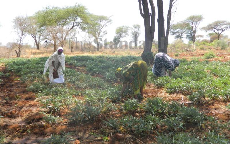 Winds of hope blowing in the arid north as women take to farming