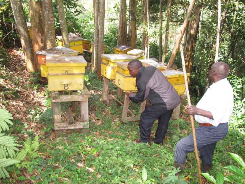 beekeepers will need60b9180fe6178.
