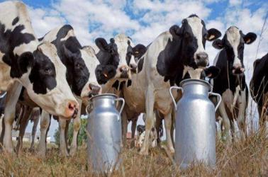 Brookside to train 100,000 dairy farmers