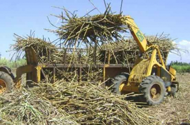 Cane millers in Kenya to pay penalties for delays