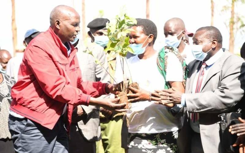 County gives farmers 7,000 coffee seedlings