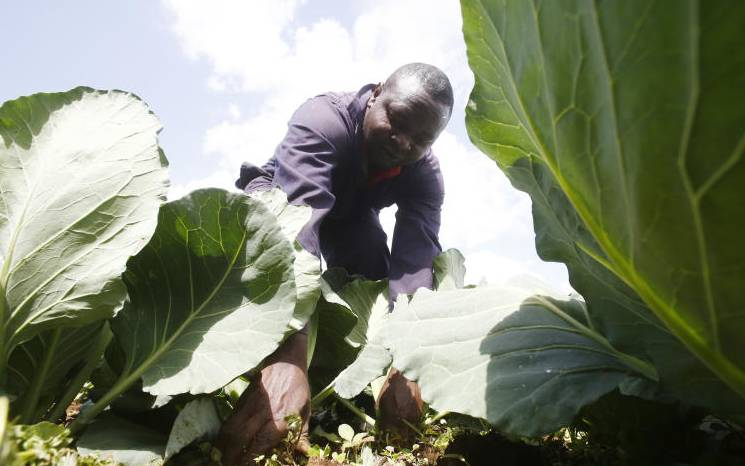 EU lifts agribusiness with Sh22b funding