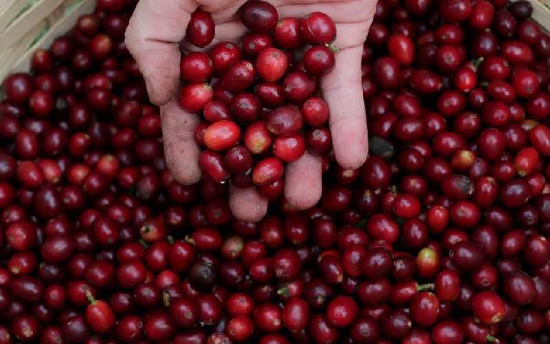 Freak frost hits heart of coffee belt, damaging crops
