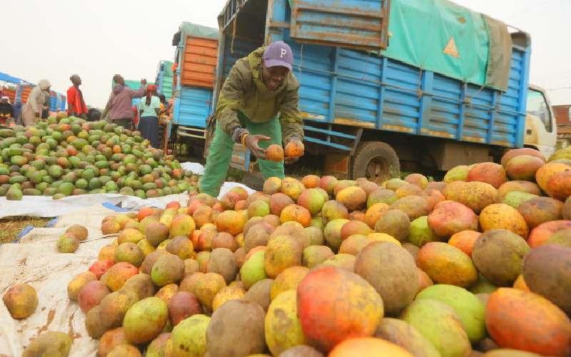 Kenya to resume mango exports to Europe after eight-year hiatus