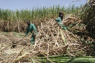 Kenyan MPs 'conspire to kill' sugar crisis report