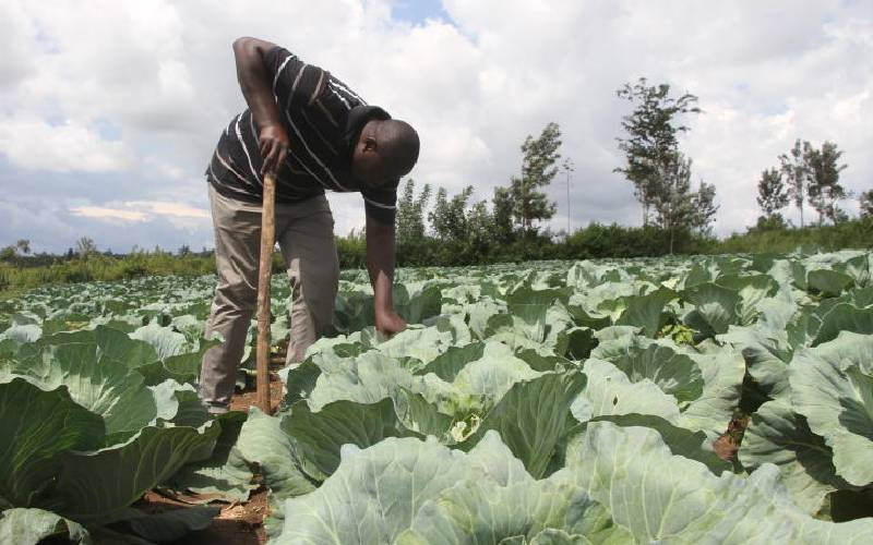 Kudos Kenya for improving local food systems efficiency