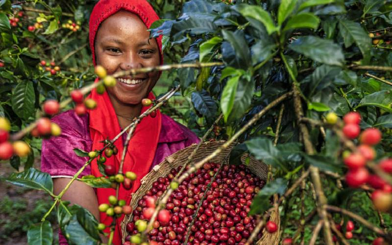 Regional coffee agencies want tariffs removed to boost trade