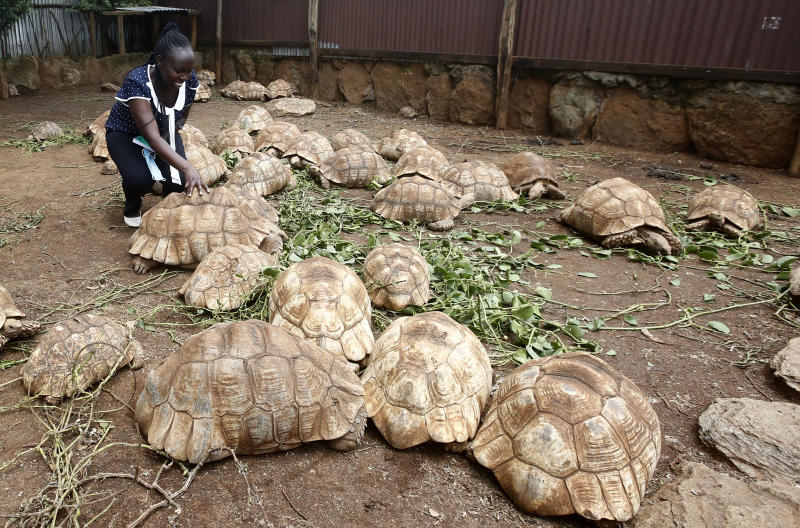 Equator Tortoise Park in Mogotio, Baringo County. The center for conservation research, eco-tourism and rescue for hundreds of tortoises have been heavily affected by Covid-19. (Photo: Kipsang Joseph)