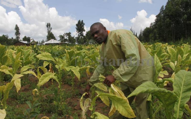 State urged to sort out tax mess in tobacco sector
