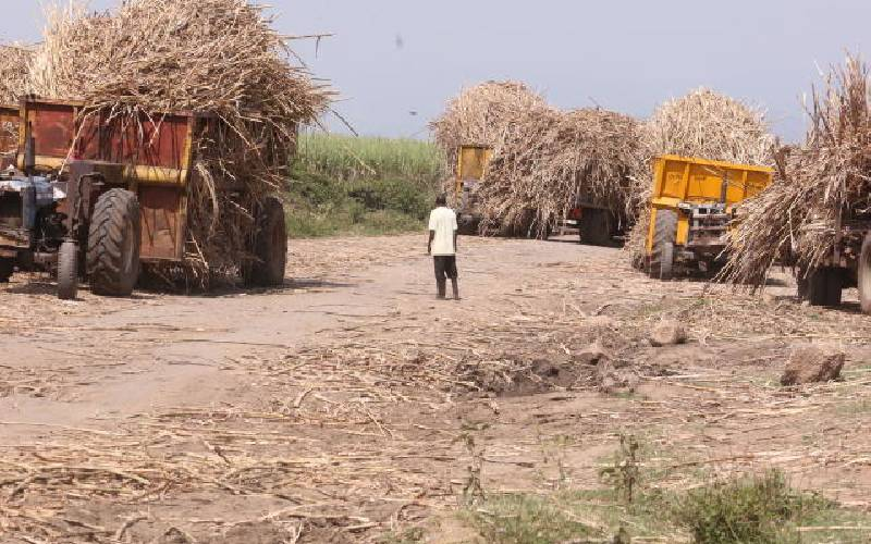 Sugarcane farmers stranded with harvest as factory grinds to a halt