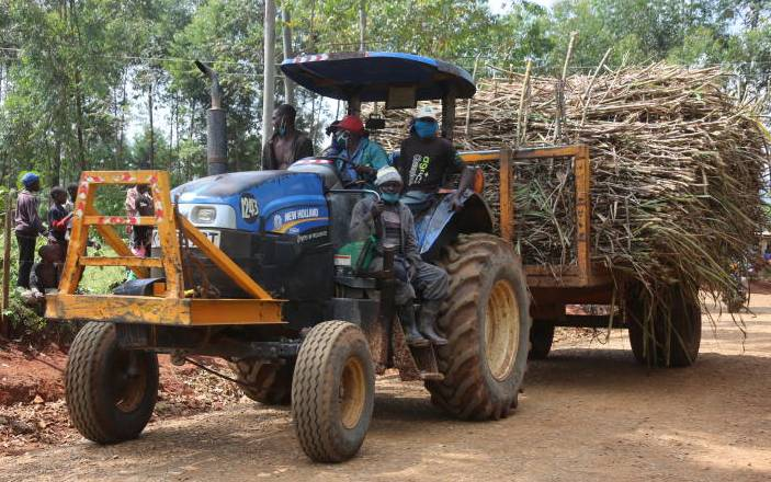 Sweet news for cane farmers as Sh62b debt waived