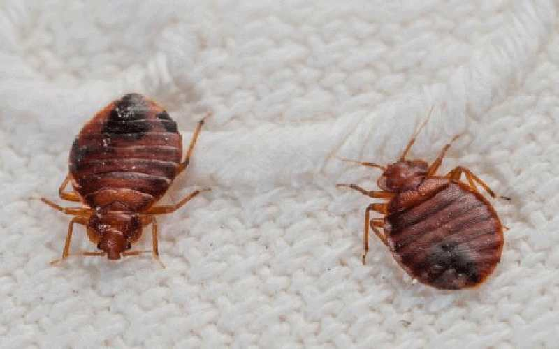 Three ways you can tell if a hotel has bedbugs