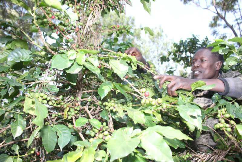 Smell the coffee and treat the real diseases killing our farmers