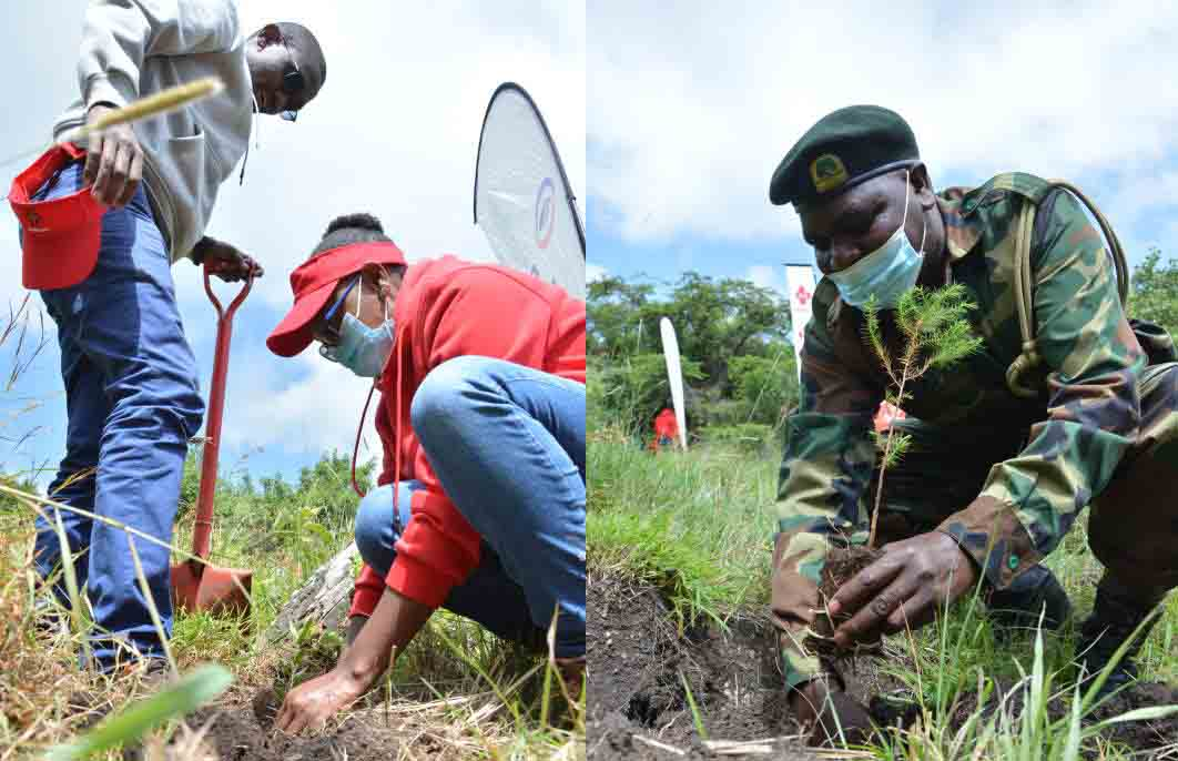 Two billion tree seedlings needed to attain 10 per cent forest cover by 2025