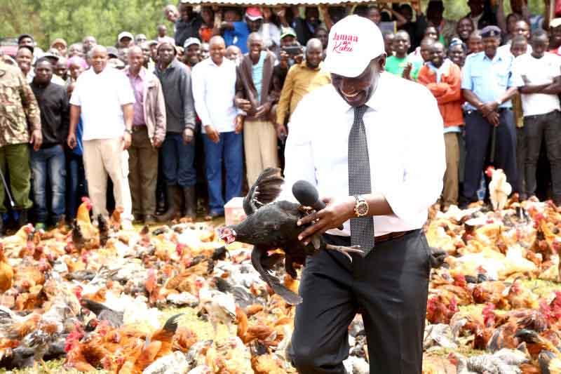 William Ruto's chicken-egg analogy beats hustler-dynasty script hands down
