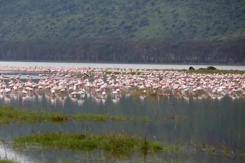 Flamingos at Lake Nakuru National Park on August 10,2020. (Photo: Kipsang Joseph)