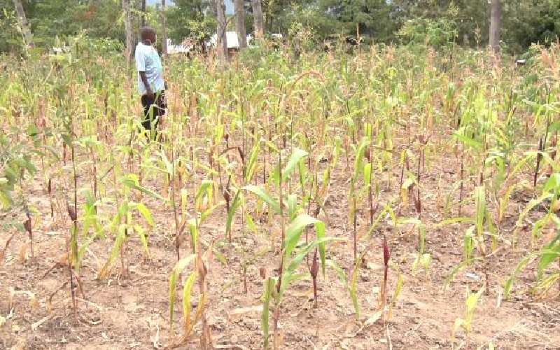 Act to avert deaths from worsening drought