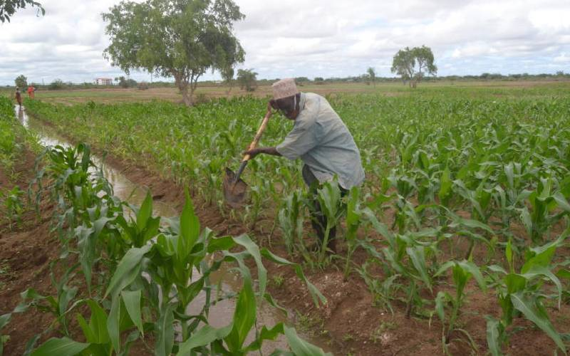 Agriculture remains the cash cow for counties