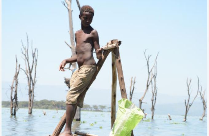 Alarm as fish catch in Naivasha drops by over 40 percent