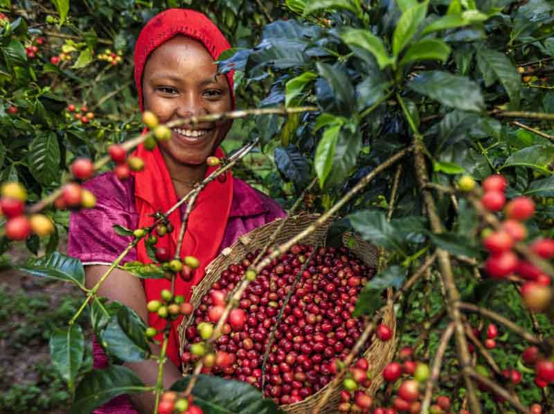 Capital Markets Authority grants licences to five coffee brokers