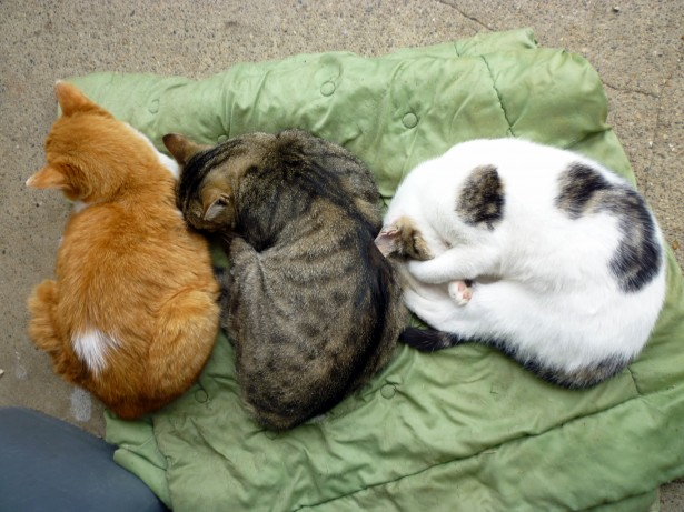 City woman shocked to find three dead cats dumped in her compound