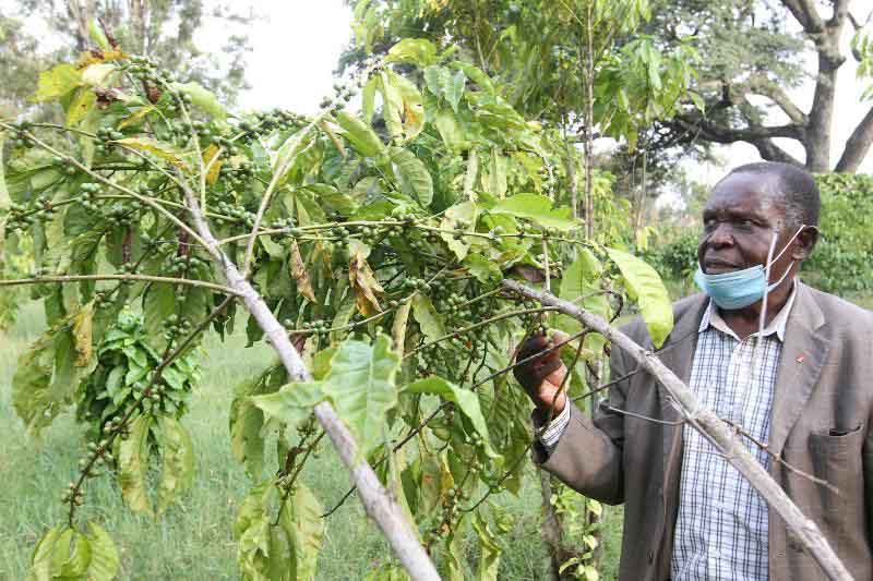 Farmers steer clear of coffee loan fund amid sector issues
