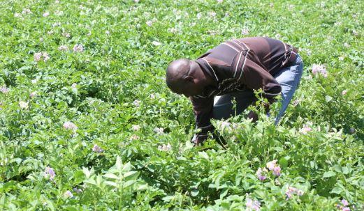 Farmers: The forgotten Covid-19 casualties