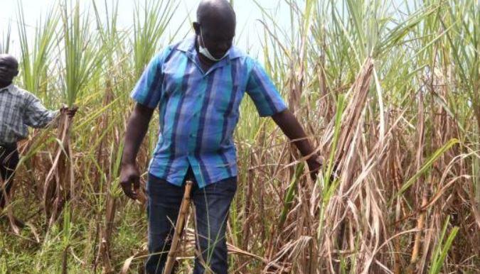 Farmers warn against delays in privatisation of sugar factories