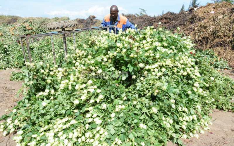 Flower farmers hit as market shrinks over the global crisis