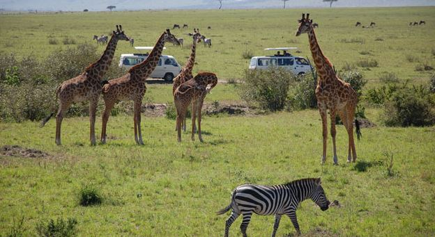 Growing tourist numbers, economic diversity steady Kenya's GDP growth