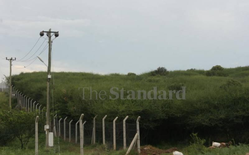 Mathenge weed invades grazing fields in Turkana