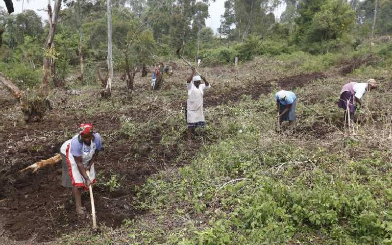 Plan to clear 1,500 acres of Menengai forest sparks uproar