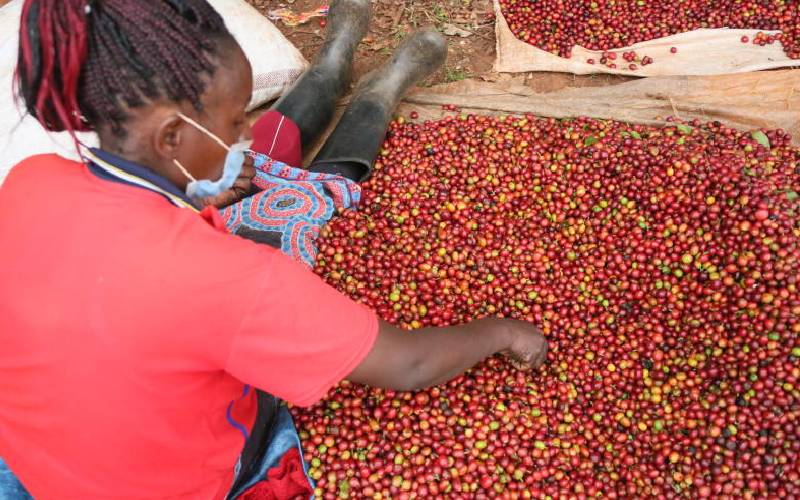 Relief for farmers after getting nod to sell their coffee without brokers