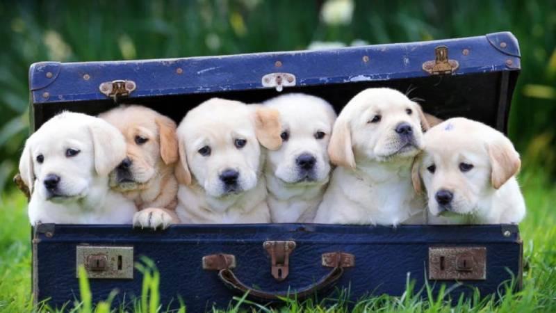 Strange laws: Keeping a dog older than four months is illegal in Kenya