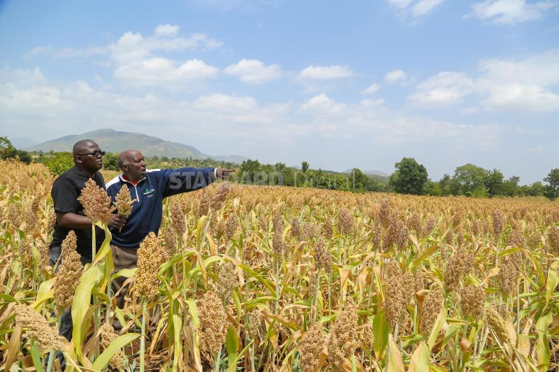 EABL to rope in more farmers
