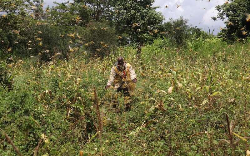 War on desert locusts being won