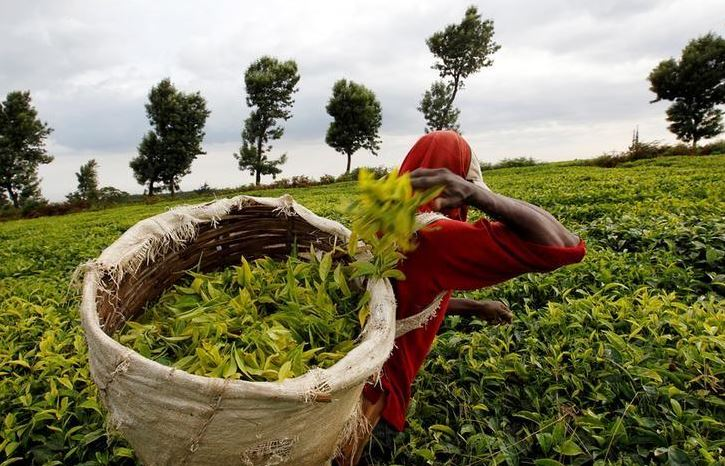 We are not opposed to tea reforms, says Mbui
