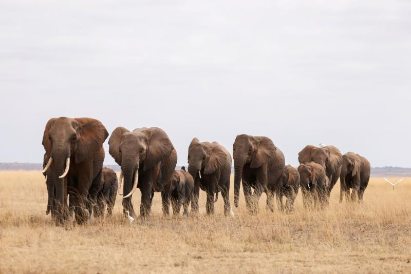 Elephant numbers up, race against time for cheetahs