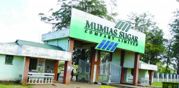 Farmers against sale of Mumias cane to rival millers